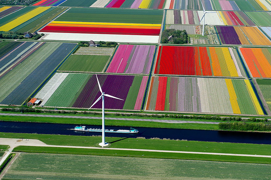 Colorful Tulip Fields, The Netherlands-1