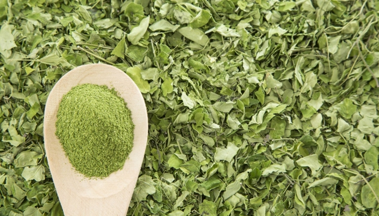 beneficio da moringa
